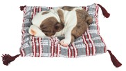 View Dog Sleeping on Woven Pillow