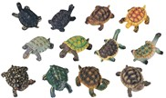 View Miniature Turtle set
