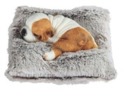 View Dog Sleeping on Gray Pillow