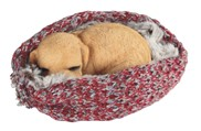 View Dog Sleeping in Woven Blanket