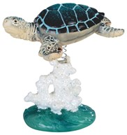 View Sea Turtle on Coral